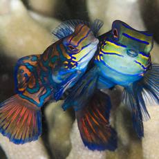 Nautilus Scuba Dive Club - Underwater Photography Exhibition