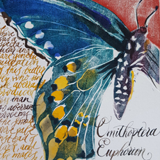 Carme Dapena - Cairns Butterflies, Stages of Life