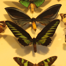 Peter Shanahan's Insect Exhibition - Children's Activity
