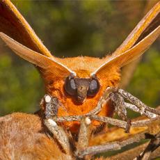 Moth Night with Dr David Rentz (AM)
