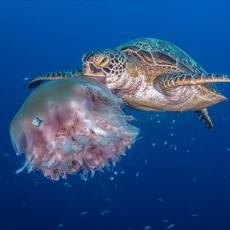 Nautilus Scuba Club Cairns - Underwater Photography Exhibition