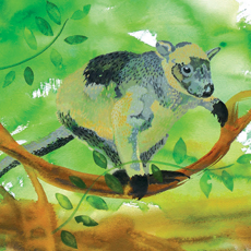 Tree Kangaroo Paintings and Shorebird Sculptures